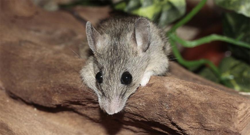 Básnička – Myšák