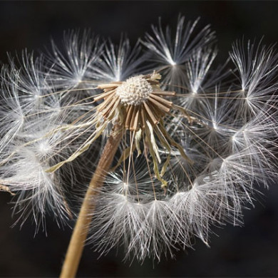 Alergie – důsledek zhýčkanosti?