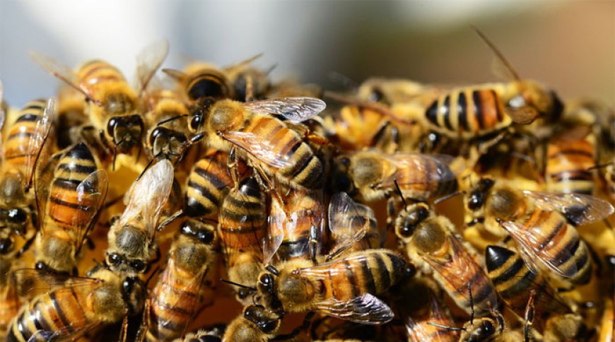 Básnička – Včely