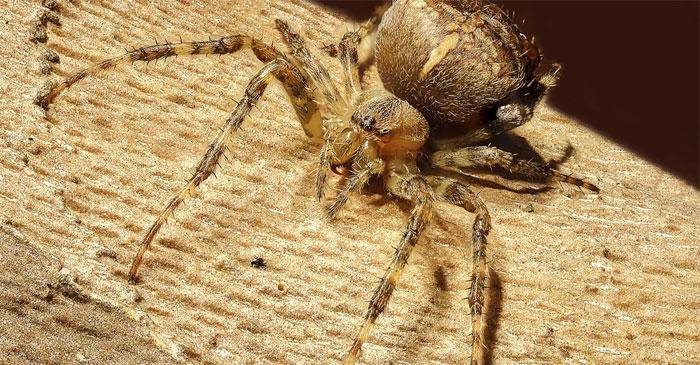 Básnička – Pavouk