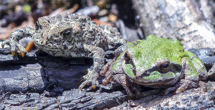 Básnička – Dva žabáci