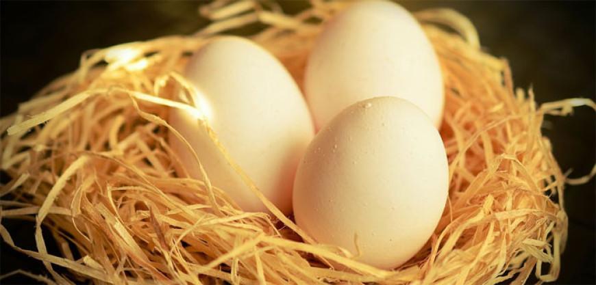 Pohádka o Honzovi a kobylím vejci