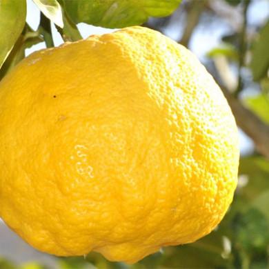 Básnička o citronu