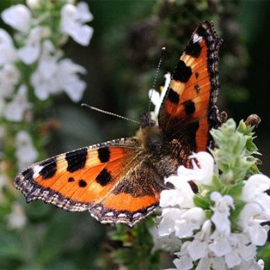 Básnička – Motýl