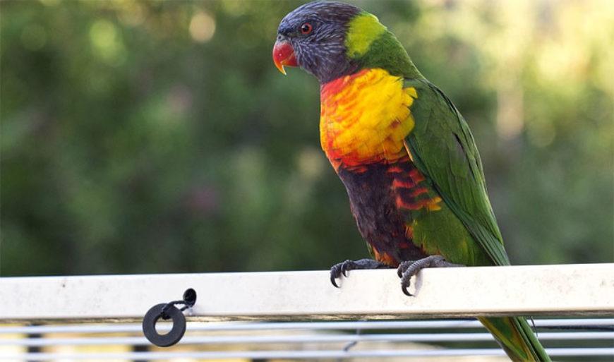Básnička o papouškovi