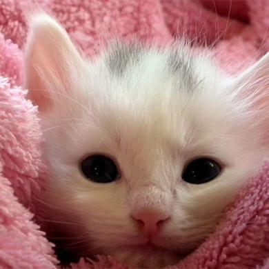 Divná kočka