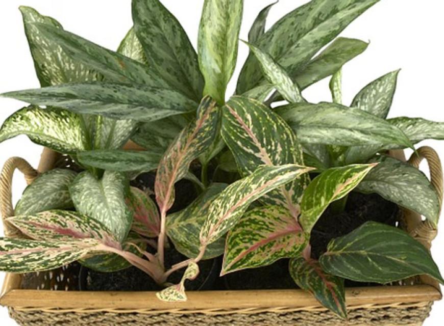 Nebezpečí pro nejmenší: pokojové rostliny