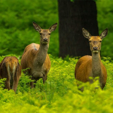 Ples lesních zvířátek