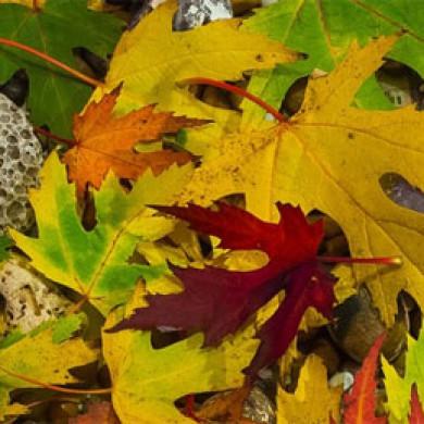 Vyrábíme s Beruškou: Podzimní lucernička