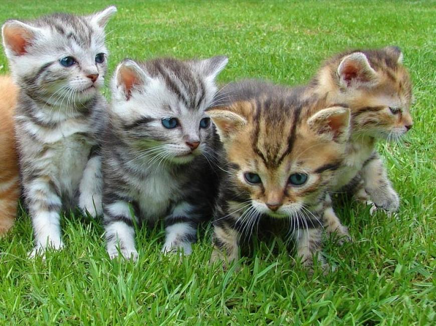 Kočka snědla koťata