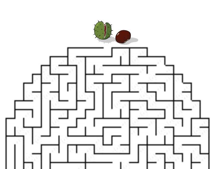 Kaštánek hledá cestu
