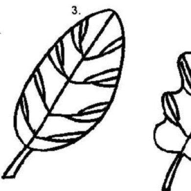 Naučte se kreslit listy