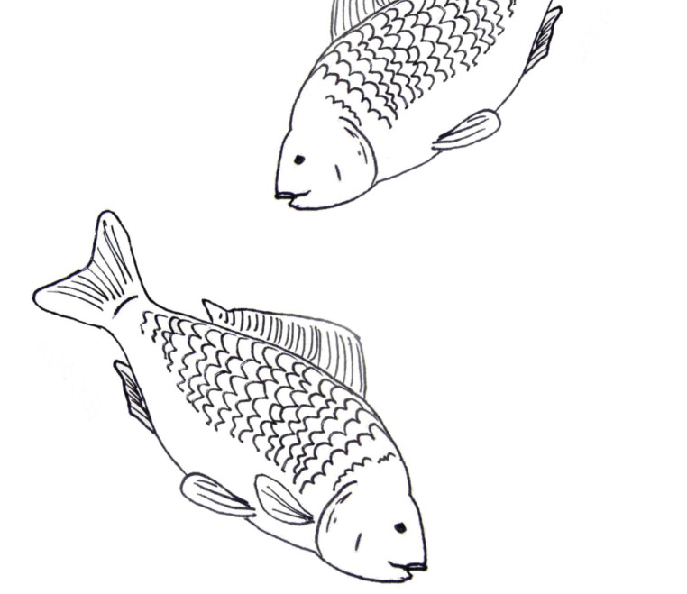 Letosni Kapri Uz Jsou Venku Z Rybnika Detske Stranky