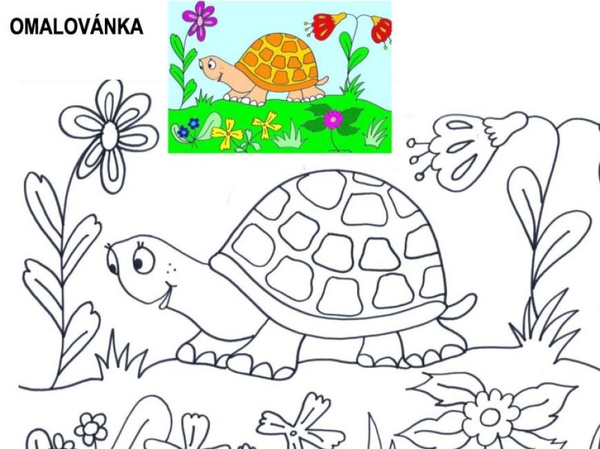 Omalovánka – želva