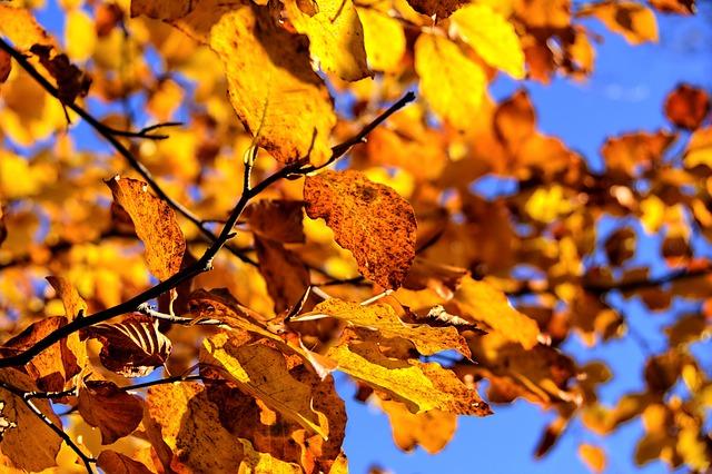 Básnička o podzimním listí
