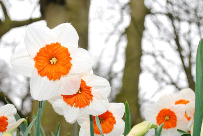Básnička o jaru