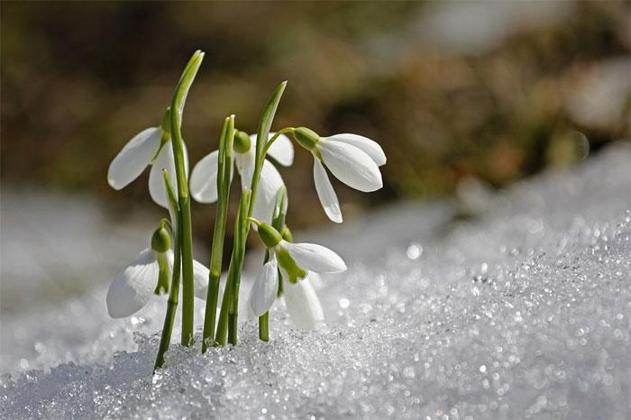 Básnička o přicházejícím jaru