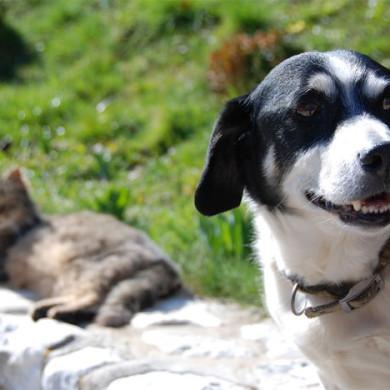 Básnička o lakomé kočce