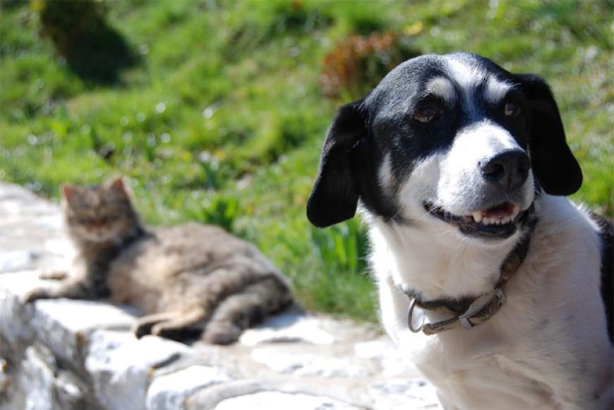 Bajka o psu a kočce