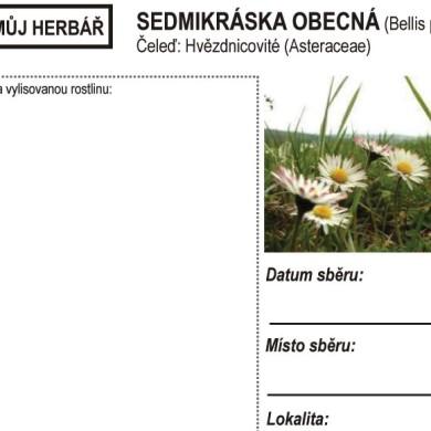 Můj herbář – SEDMIKRÁSKA