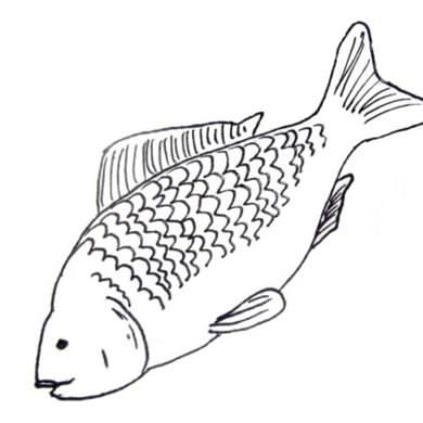 Najděte tři rozdíly mezi rybami