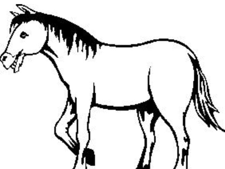 Omalovánka – kůň