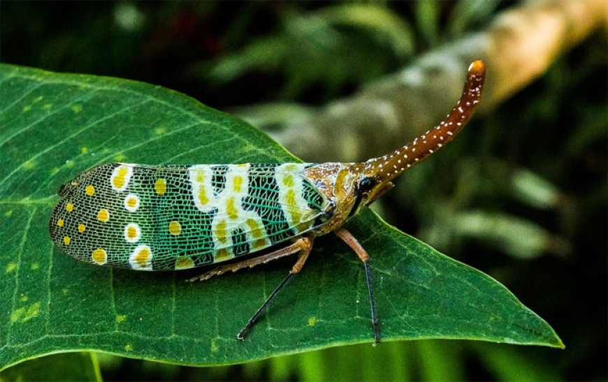 O hmyzu a taky o dovolené