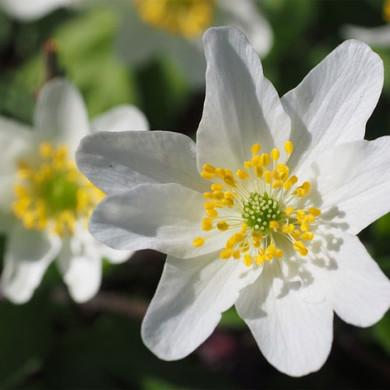 Duben – básnička s bludištěm