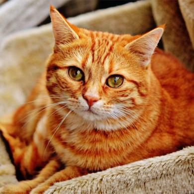 Mámo, táto, kup mi… kočku