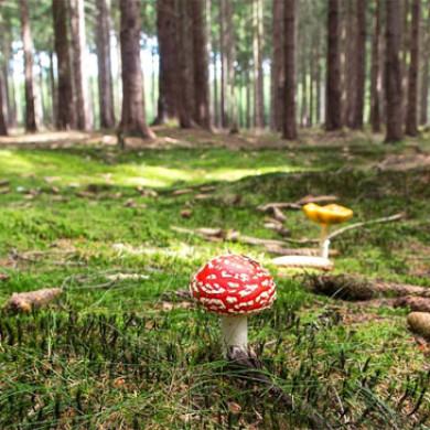 Jak jsme jeli na houby