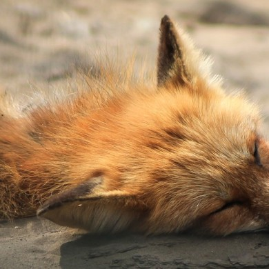 Básnička o lenosti