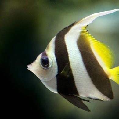 Rybka v akváriu