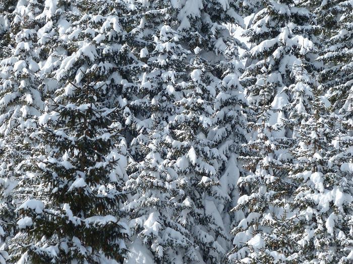 Básnička – Podivná zima