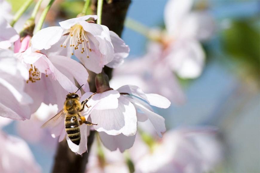 Básnička o první včele