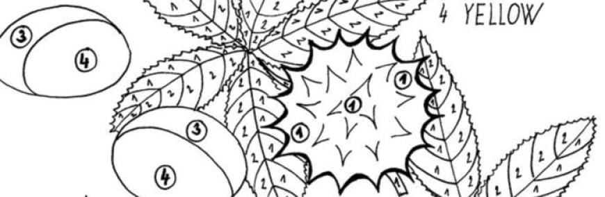 Kaštany – omalovánka s anglickými slovíčky
