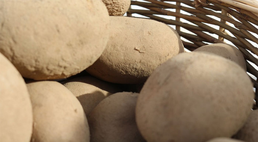 O staré bramboře