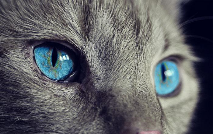 Básnička o kočičích očkách