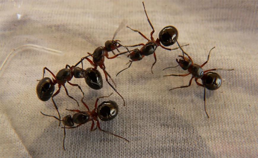 Básnička – Mravenec