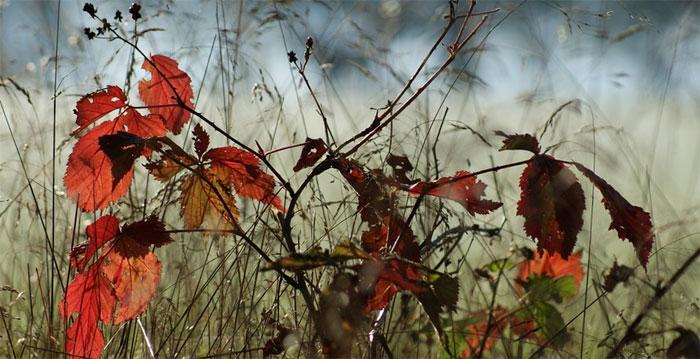 Básnička o podzimu