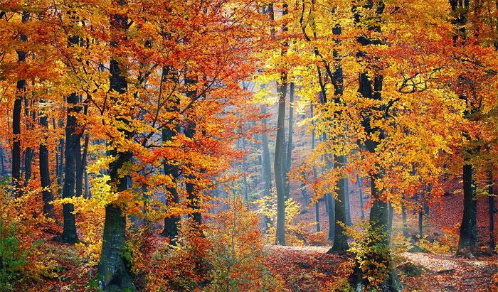Podzimní usínání