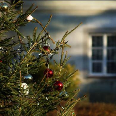 Vánoční koledy a říkanky II.