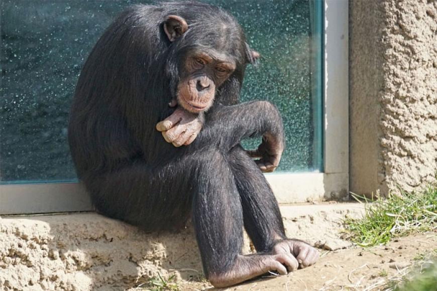 Jarní prázdniny diplomatické opice