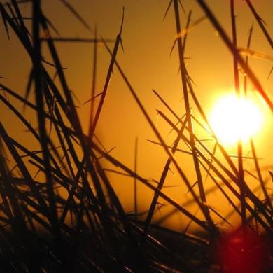 Sluníčková básnička