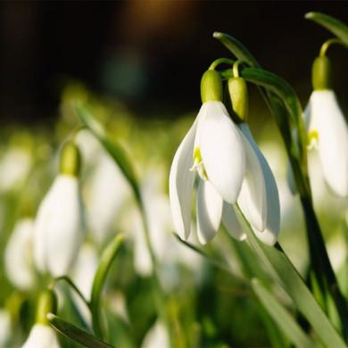 Jarní básnička