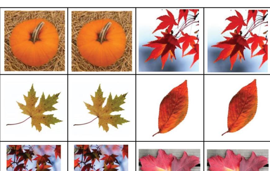 Podzimní fotopexeso (+ výzva pro naše čtenáře)