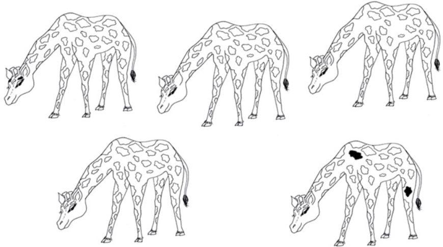 Která žirafa nemá druhou do dvojice?