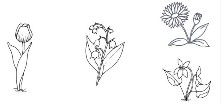 Křížovka – jarní květiny